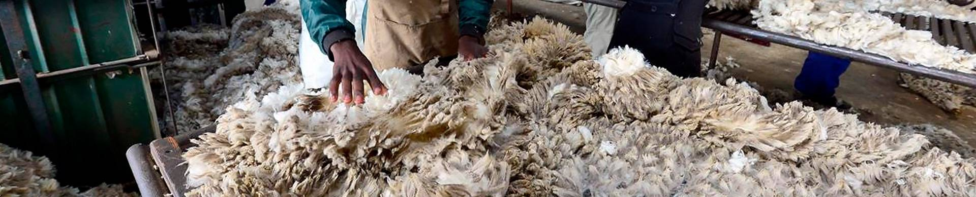 Wool-farmer-information-south-africa