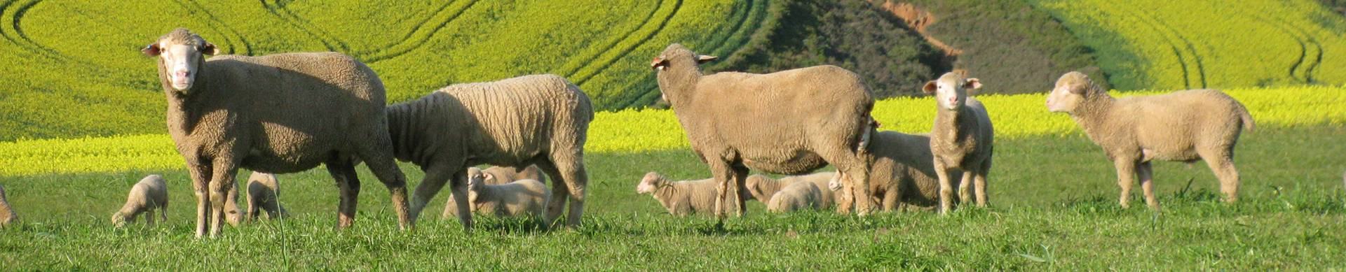 About-the-nwga-wool-growers