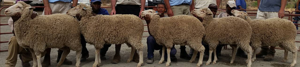 National-wool-growers-association-of-south-africa-industry